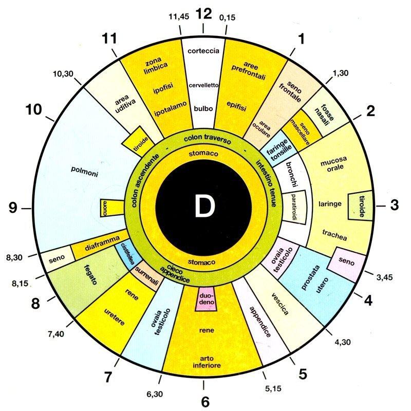 iridologia mappa iride occhio corso on line iridologo naturopatia cure alternative erbe benessere prevenzione aiuto persona allopatia oriente D.A.S.P. scuola operatori olistici