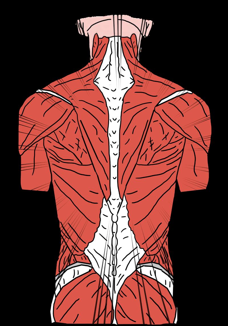 back-pain-3769360_1920
